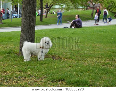Happy and cute white fluffy dog in the Park.