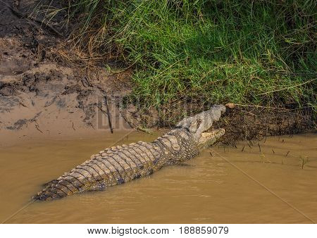Crocodile Waiting For Food At The Isimangaliso Wetland Park, South Africa