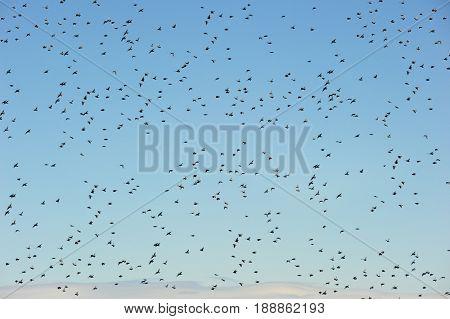 Sky full of flying birds
