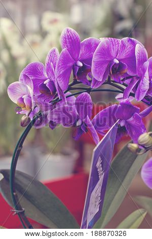 Orchid Flowers in the garden. Beautiful flowers arrangement with green floral background. Orchid flower and green leaves background in garden. Orchid is considered the queen of flower in Thailand.