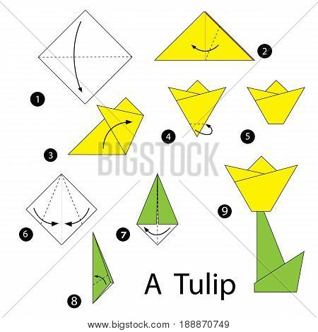 step by step instructions how to make origami A tulip.