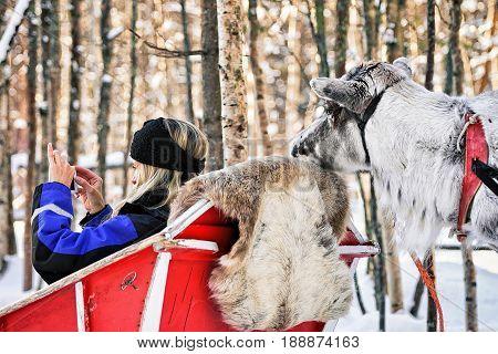 Woman In Sledge Taking Photo Of Reindeer In Winter Rovaniemi