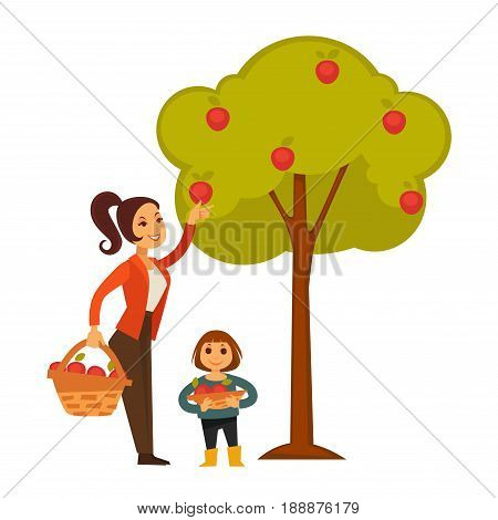 Mother and daughter picking apples from tree and putting them in baskets. Family spending time outdoors and working in garden by gathering tasty and healthy harvest vector colorful illustration