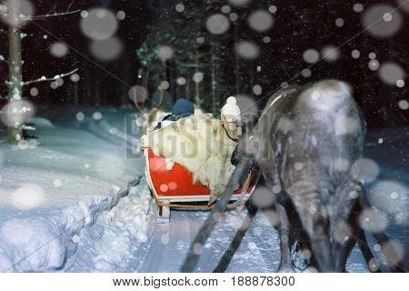 People In Reindeer Sledding At Night Safari In Lapland Finland