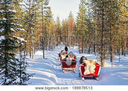 People in Reindeer sled caravan safari in winter forest in Rovaniemi Finnish Lapland poster