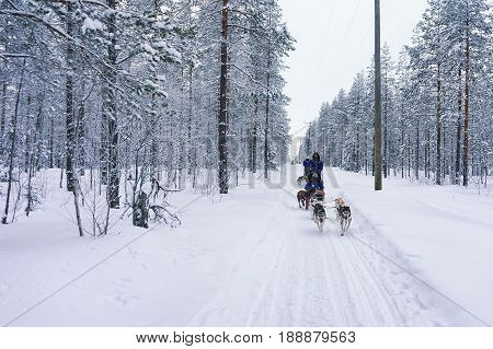 Husky Sledge In Lapland Forest Finland