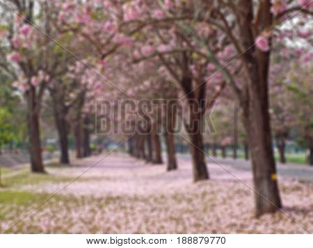 Abstract blurred field of pink trumpet tree background