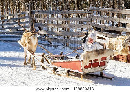 Girl In Reindeer Sledge In Winter Rovaniemi