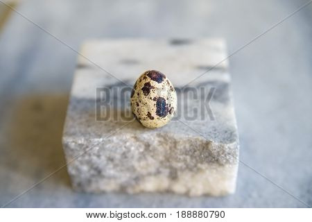 Close up of one quail egg on white piece of stone