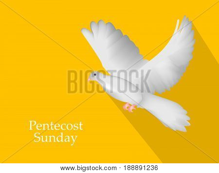 illustration of pigeon with Pentecost Sunday text on yellow background