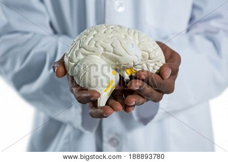 Mid section of doctor holding anatomy brain