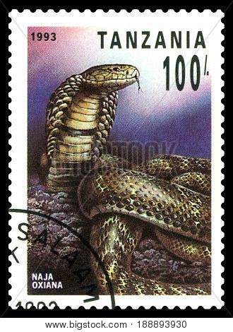 STAVROPOL RUSSIA - May 06 2017: a stamp printed by Tanzania shows Central Asian cobra (Naja Oxiana) series Reptile circa 1993