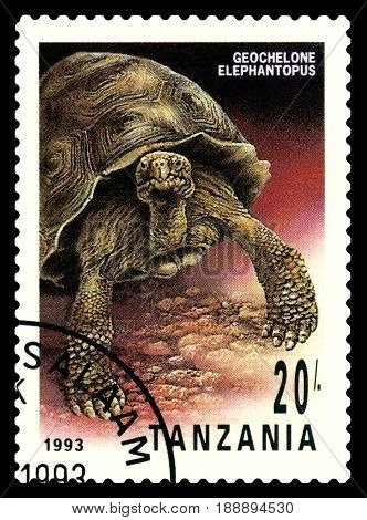 STAVROPOL RUSSIA - May 06 2017: a stamp printed by Tanzania show Geochelone Elephantopus series Turtles circa 1993