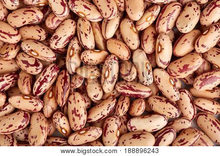 Light Spotted Kidney Bean Isolated On White Background. Light Kidney Bean Texture Background. A Larg