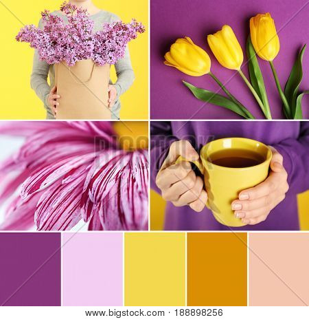 Color matching palette. Collage with accent on lilac and yellow colors