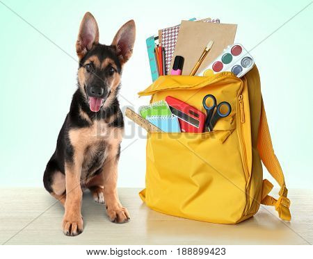 Back to school concept. Cute dog with backpack full of stationery on color background