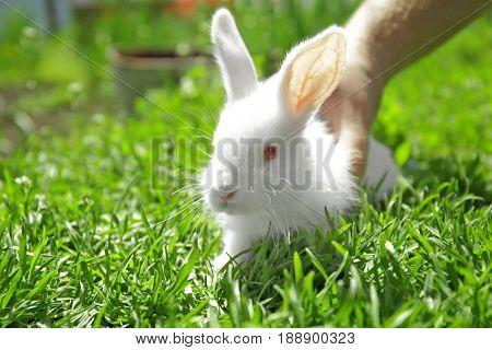 Man holding cute little rabbit on green grass