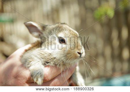 Cute little rabbit in male hand