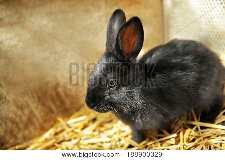Cute little rabbit on farm
