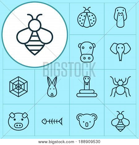 Animal Icons Set. Collection Of Cobweb, Bumblebee, Seafood Skeleton And Other Elements. Also Includes Symbols Such As Kine, Bumblebee, Reptile.