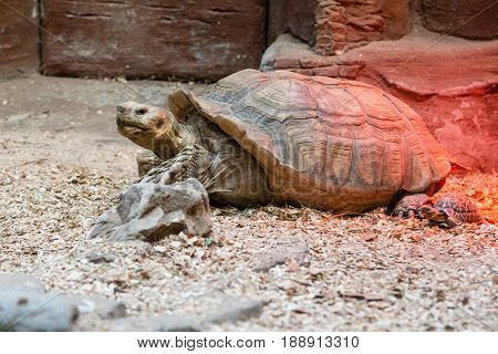 Large turtle close up . . .