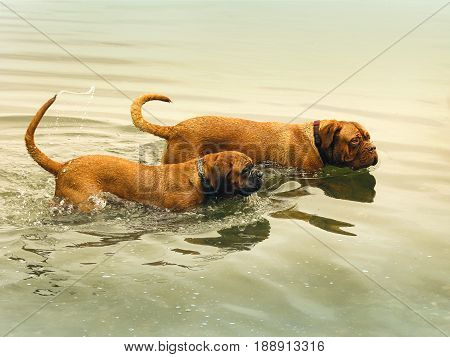 Bordeaux Doga - Playing In Water