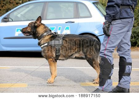 Canine Unit of the Italian police for the detection of explosive material during a counterterrorism operation