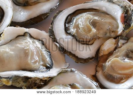 Raw Oysters in a Shell / Close up Raw Oysters in a Shell / delicious raw sea food selection / gourmet / sea food restaurant / stylish menu
