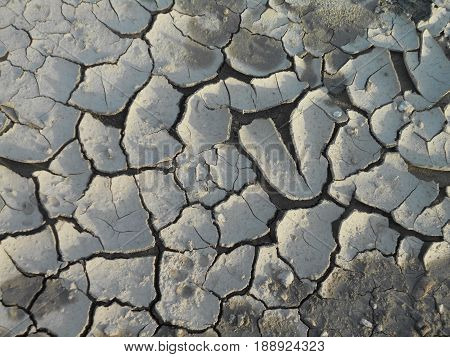 mud and silt on the river bank, cracked from drought, can be used as a background or natural pattern