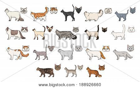 cats breeds, side view and muzzle set. Collection with hand drawn colorful realistic illustration. part 2