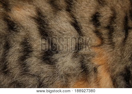 red fur , beautiful natural gray fur with red spots, closeup