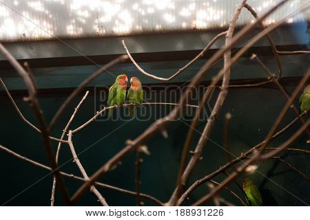 Couple In Love Close Friends Parrots Sit On A Close-up Branch