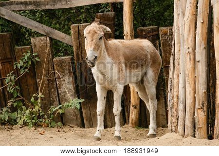 Donkey is standing near the fence close up