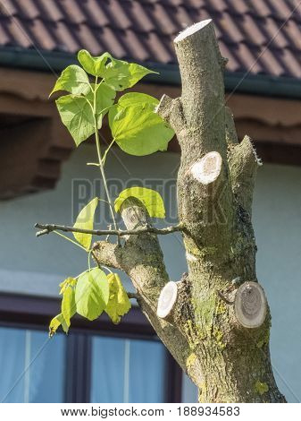 sprouting a tree