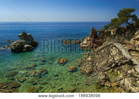 Spanish seascape with rocky shore and a dry dead tree in foreground