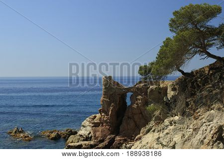 Rocky shore of Mediterranean Sea with two pines at the in Spain landscape