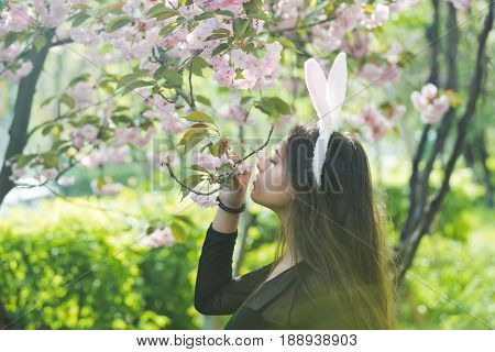 girl or pretty woman with rosy bunny ears and long brunette hair smelling blossoming sakura flowers from tree in spring park on sunny day on blurred floral environment. Easter. Springtime