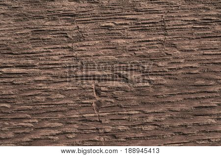 Texture of a tree brownish color gorizaoanthal background
