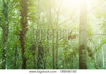 Incredible tropical rainforest view with sun flare in morning.