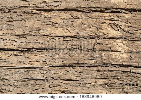Loose texture of a rotten tree vertical background brown color