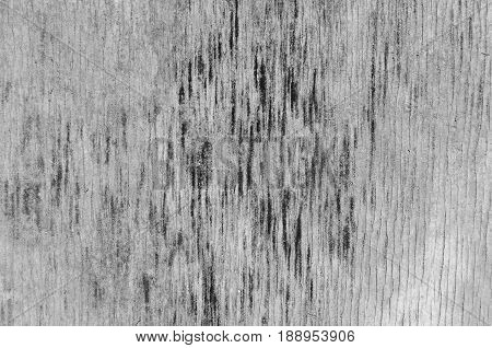 Texture of a tree with black spots a wooden panel with black and white shades of color