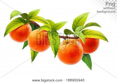 Orange on a branch with leaves, png without background