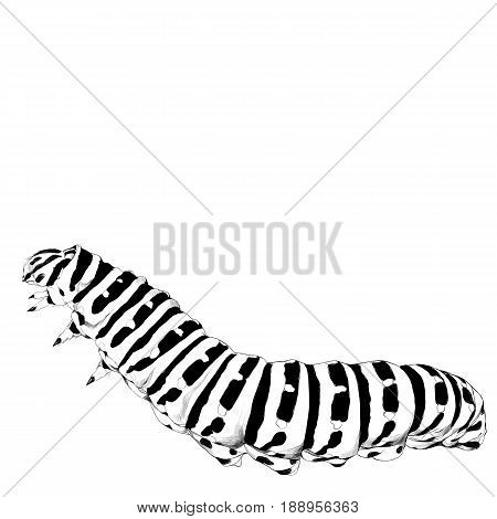 the caterpillar crawls sketch vector graphics black and white drawing