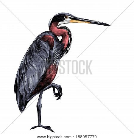 AGAMI bird stands on one leg sideways and looking into the distance sketch vector graphics color picture