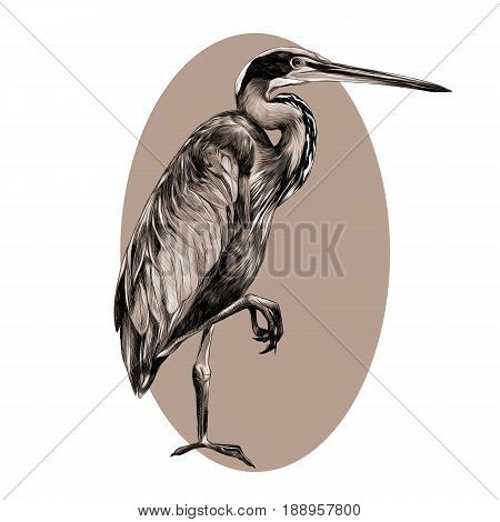 AGAMI bird stands on one leg sideways and looking into the distance sketch vector graphics black and white pattern on a beige background oval