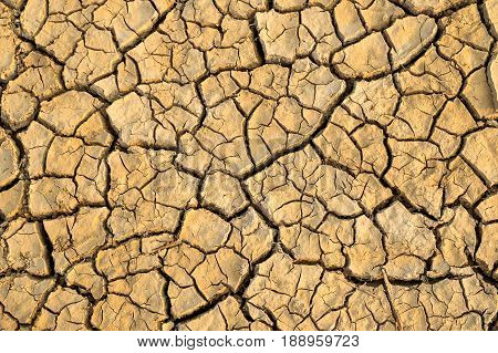 gold and crack earth dry ground surface gold brown clay soil dry texture in the morning light