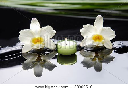 Beautiful white orchid with plant ,candle,and therapy stones