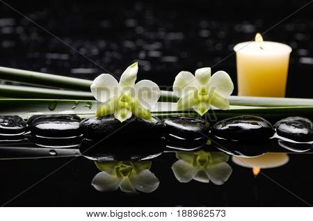 still life with pebbles and two orchid ,candle,plant