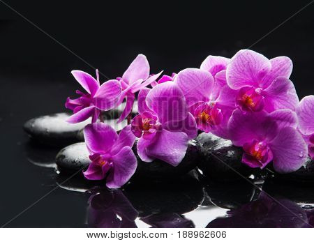 Lying on pink orchid with black stones on wet background
