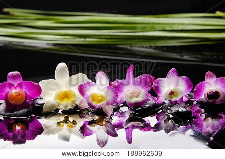 Beautiful set of orchid with plant and therapy stones